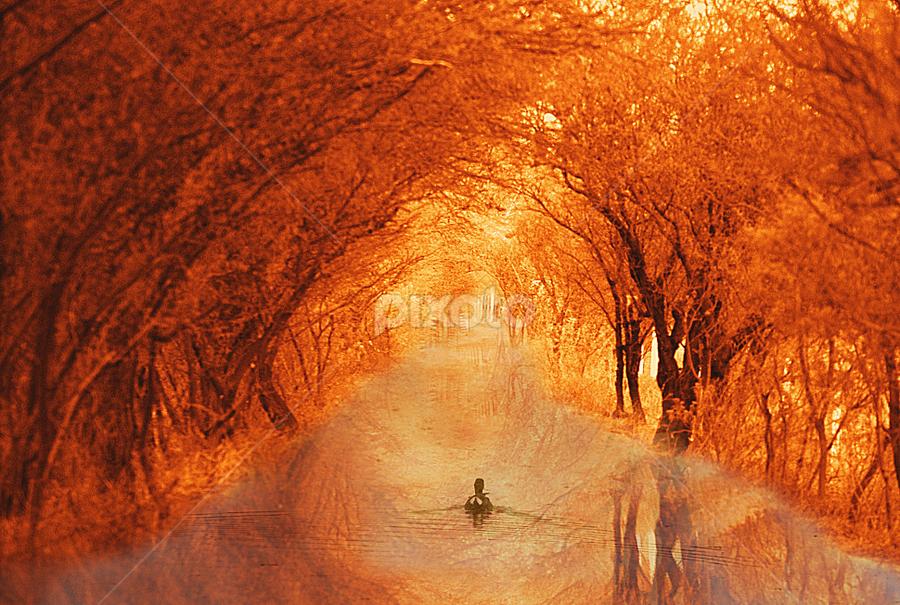 duck swimming down the walk by John Kolenberg - Digital Art Places ( duck, trees, down, walk, swimming, tunnel,  )