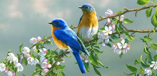 bird sound mp3 ringtone free download