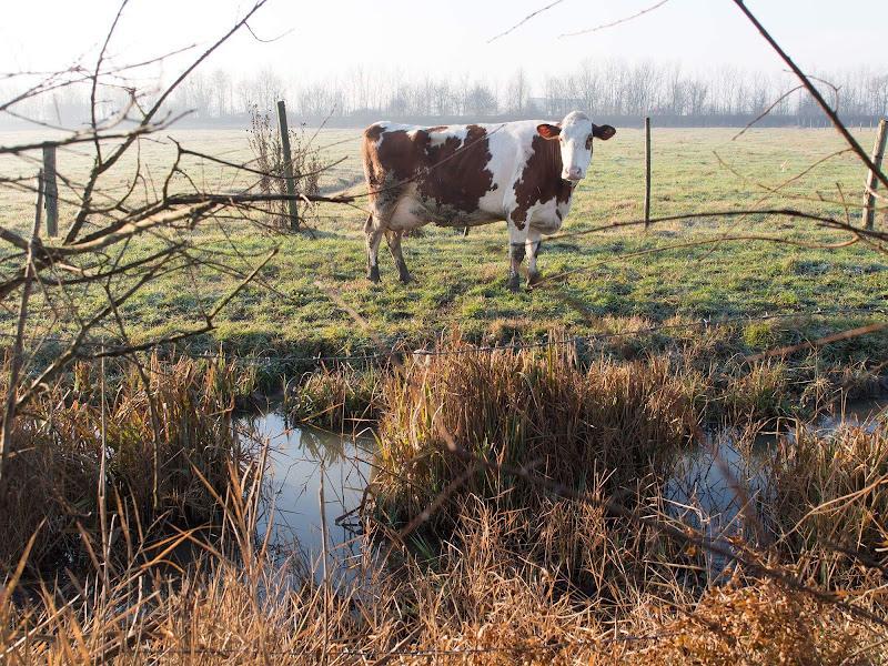 Paesaggio agricolo padano di boomerang