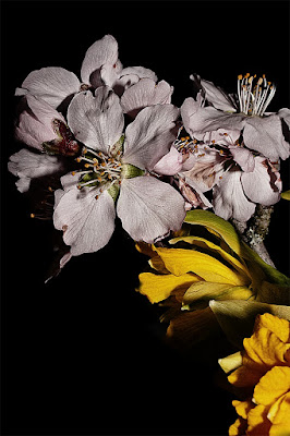 Fiori rosa fiori di..... di funakoschi