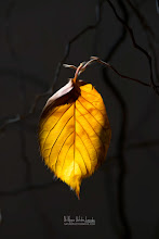 Photo: Gold Leaf