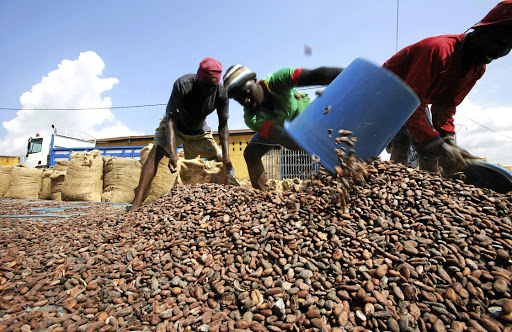 Workers fill sacks with cocoa beans in Soubre, Ivory Coast, on July 19 2018. Picture: REUTERS/THIERRY GOUEGNON