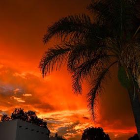 Jozi sky by Graeme Wilson - Landscapes Sunsets & Sunrises ( palm, flash, sunsetting, sunset, last night )