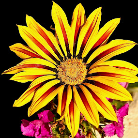 Flower by Jane Fourie - Flowers Single Flower ( flower up close, colorful, flora, yellow flower, flower,  )