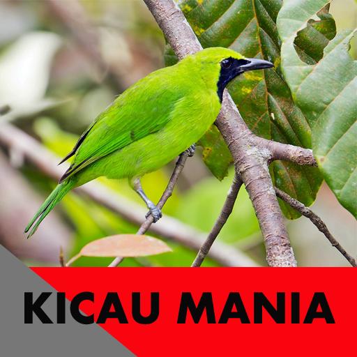 Kicau Mania