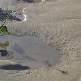 Deursettingsvermoe by Lana Kirstein - Nature Up Close Water ( sand water stingel blom  weerkaatsing )