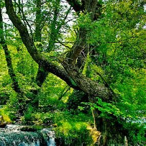 Una by Jadranka Bužimkić - Landscapes Forests
