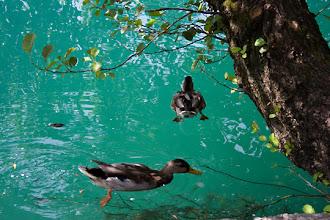 Photo: Bled järven vesi oli todella kirkasta ja maukkaan väristä =)