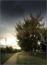 Photo: Artar - Paltin de munte (Acer pseudoplatanus)  - de pe Calea Victoriei alee Mr.1 - 2017.09.22