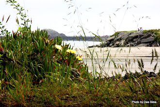 Photo: (Year 2) Day 359 -  Estuary at Crescent City Campsite #2