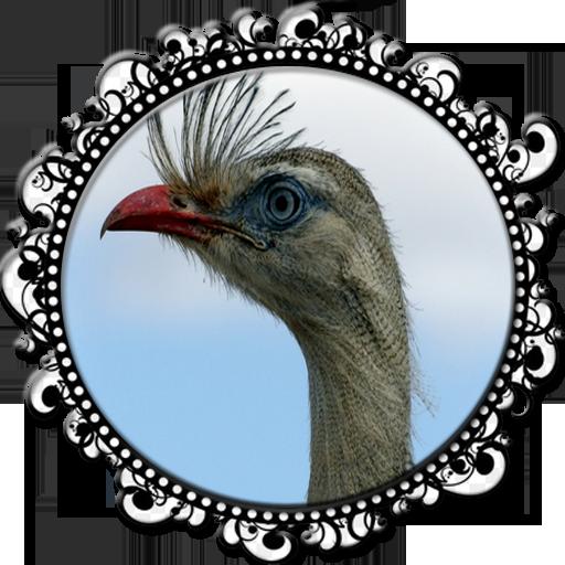 Seriema ave com canto mais lindo
