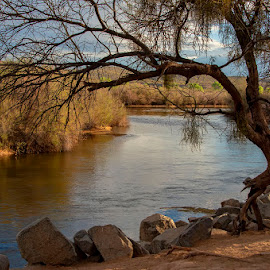 Solitude by Rita Taylor - Landscapes Sunsets & Sunrises ( trrees, arizona, sunset, river, water )