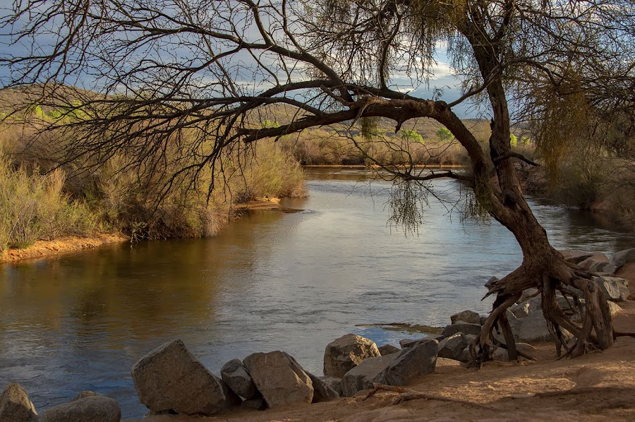 Solitude by Rita Taylor - Landscapes Sunsets & Sunrises ( trrees, arizona, sunset, river, water )