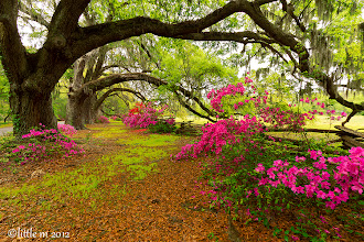 "Photo: ""Sweet Southern Comfort"" ~ for #TreeTuesday"