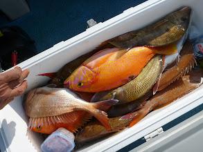 Photo: クマガイさんの釣果その2 真鯛合計19匹でした! 今回も大漁でしたね!