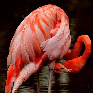 Flamingo 1 Edited.JPG