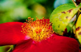 Photo: Rose Garden