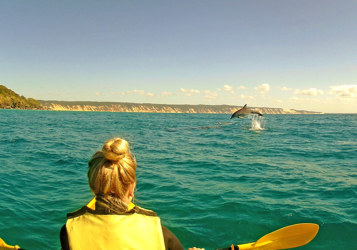 Kayak with Dolphins