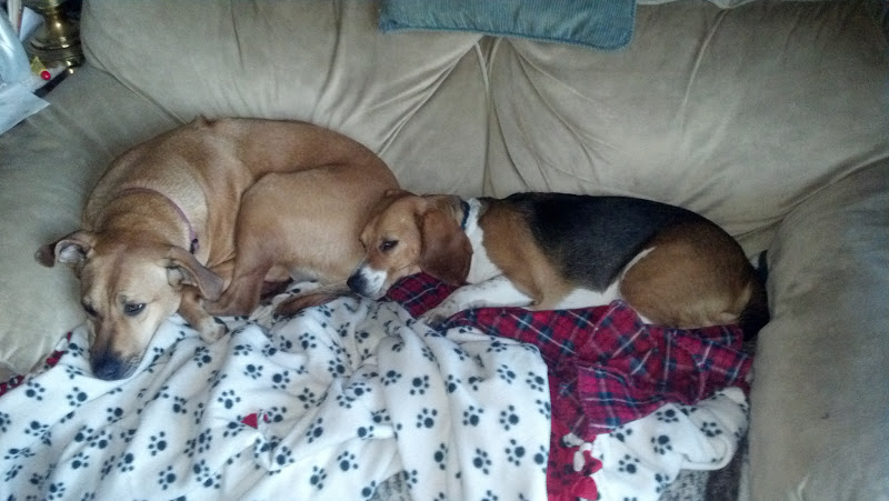 Photo: Ginger and her buddy Riley