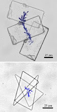 Photo: Microbots powered by flagellated bacteria