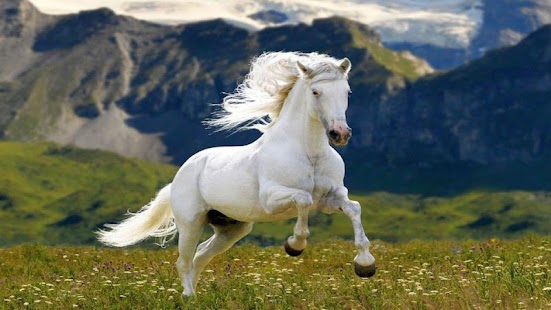 Horse wallpapers hd android apps on google play horse wallpapers hd screenshot thumbnail altavistaventures Gallery