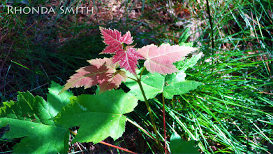 Photo: Some red leaves among the green ones.
