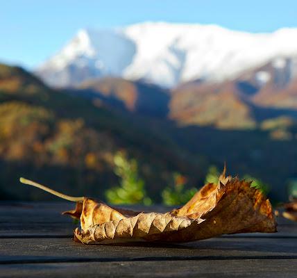 leaf me alone di sbaruzzi