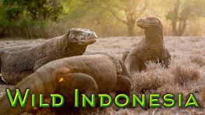 Wild Indonesia thumbnail