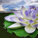 Lotus Flower Wallpapers icon