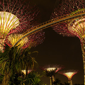 Garden By the Bay @ Singapore by Bryan Sin - City,  Street & Park  City Parks