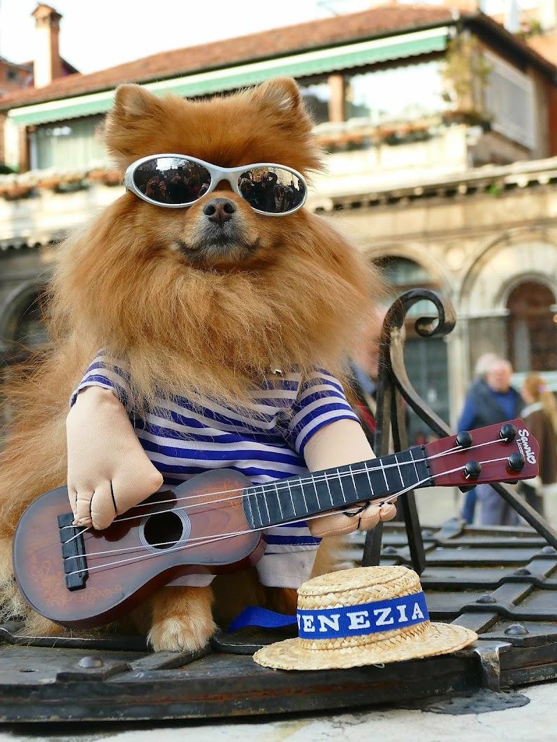 Rockdog di PaoloRd