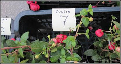 Photo: 2015.05.20 - din Piata Centrala Agroalimentara
