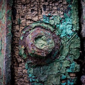 Old and strong by Ron n'Roll - Nature Up Close Trees & Bushes ( old, screw, wood, rotting )