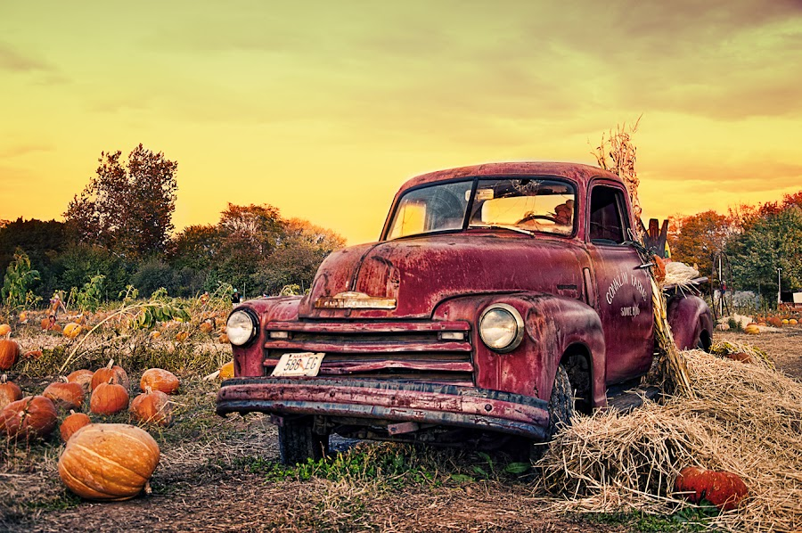 Old Chevy Truck at Conklin Farm by Nino Ignacio - Transportation Automobiles ( farm, pumpkin, chevrolet, truck )