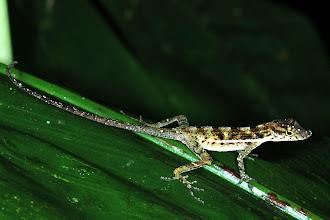 Photo: 13 unidentified, Esquinas Rainforest (08°42´/-83°12´), 02.07.2008, Author Erwin Holzer