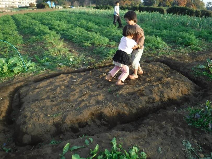 いつの間にか、畑に土俵ができてました。