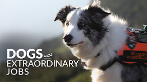 Dogs With Extraordinary Jobs thumbnail