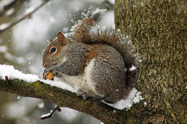 L'ultima neve di febbraio