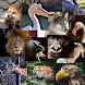 私の動物園 - Androidアプリ