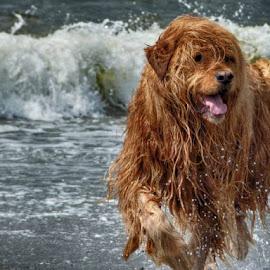 Pure joy. by Brenda Baird - Animals - Dogs Playing (  )