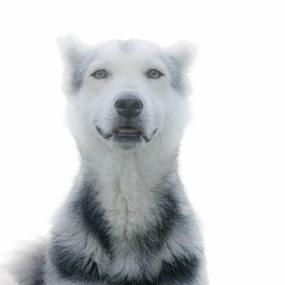 hello stranger by Lili Screciu - Animals - Dogs Portraits ( dogs, happiness,  )