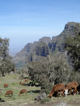 Photo: Trekking from Sankaber to Geech camp in Simien Mountains National Park