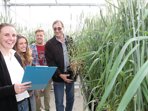Dr Paolo Corneo, left,  Dr Angela Pattison, Mr Andrew Hegerty and Professor Richard Trethowan check plots in the greenhouses at the Narrabri Plant Breeding Institute.