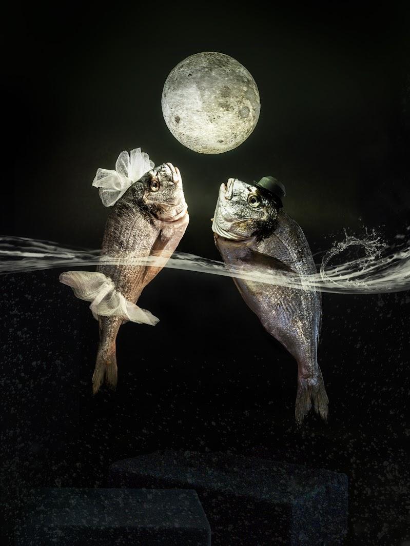 moon river di bi