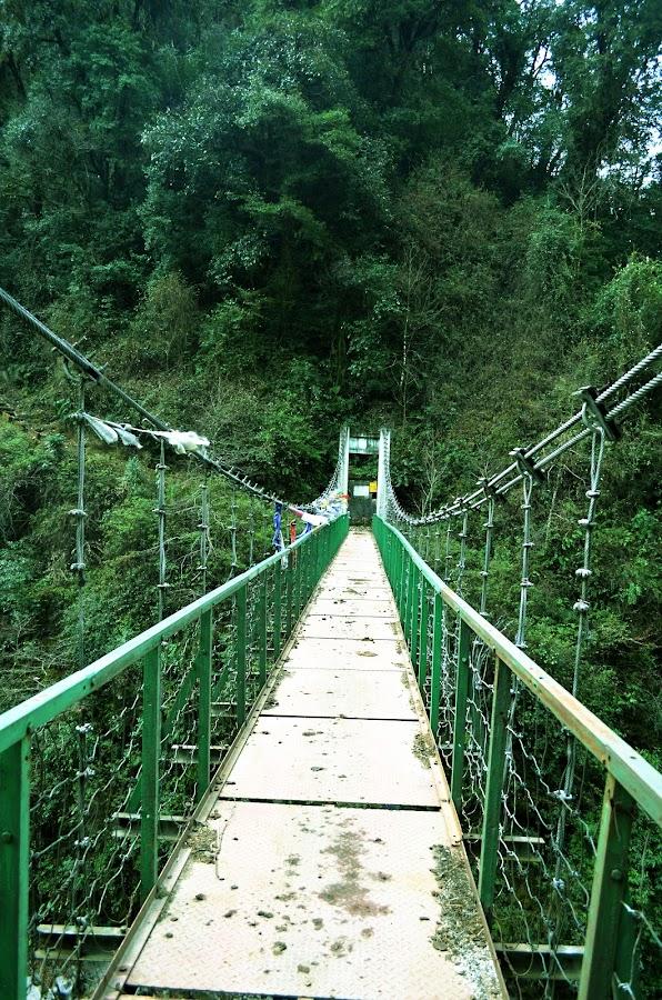 Bridge the jungle.. (wild sikkim) by Arnab Bhattacharyya - Buildings & Architecture Bridges & Suspended Structures