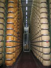 """Photo: Doch die """"Patienten""""-Laibe sind bumperlg'sund und reifen zu bestem Parmiggiano Reggiano."""