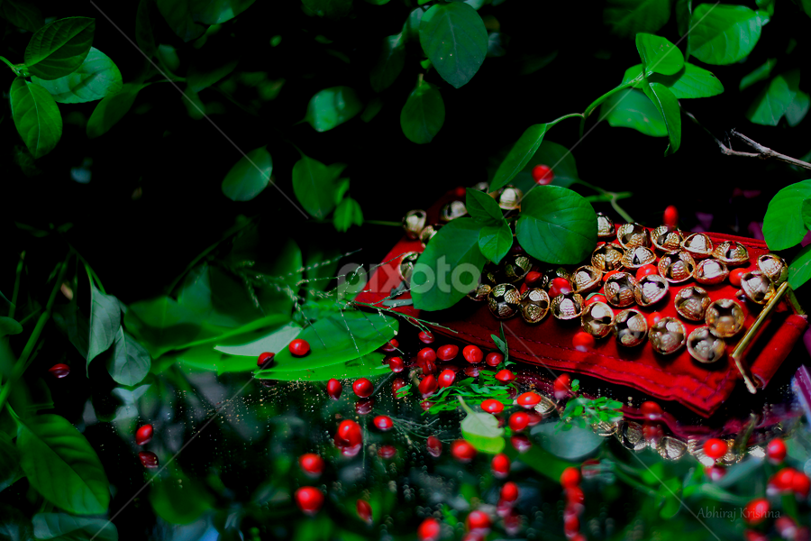 The Art Of Greenery And Red Jewelry Artistic Objects Pixoto