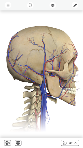 Interactive Anatomy APK download | APKPure.co