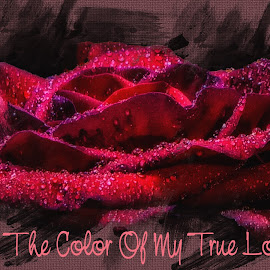 Red Is The Color by Dave Walters - Typography Captioned Photos ( rose, nature, magical, colors, artistic, typography, flowers )