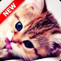 Kitten Wallpapers icon